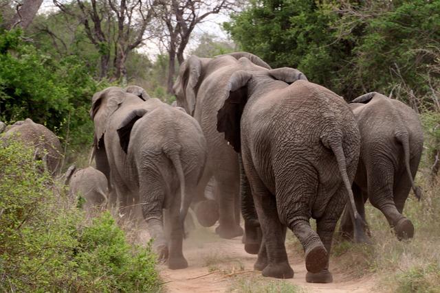 elephant 426990 640 - Ingin Liburan Ke Luar Negeri? Yuk Sambangi Destinasi Wisata Terbaik Dunia Ini
