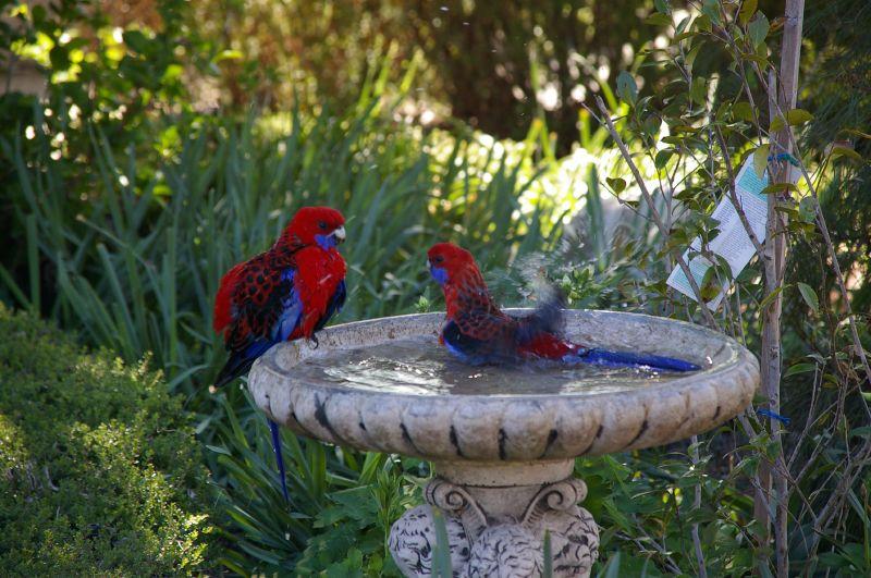 Aksesoris Taman Bird Feeder Tukang Taman Mojokerto